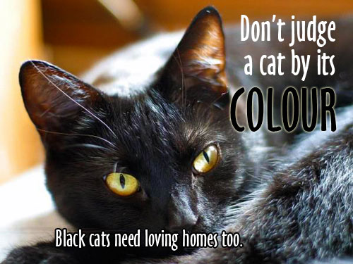 Adopt-a-black-cat-graphic-2014