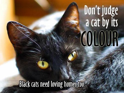 Adopt-a-black-cat-graphic-2014