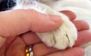 Cat-paw-hand