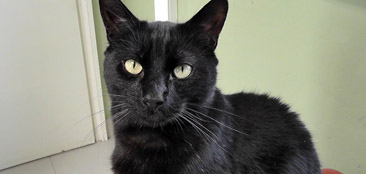 Cats-for-adoption-image2