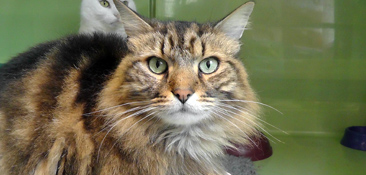 cats-for-adoption-image6