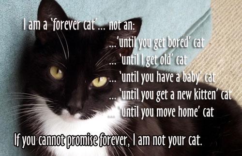 Forever-cat-banner