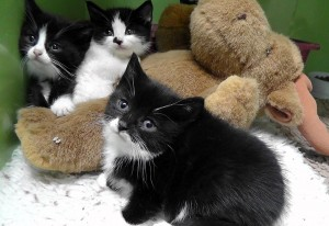Orphan feral kittens, rescued from a disused farm building, now have a much brighter future