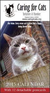 Timmy the ex-feral became our 2015 calendar front cover boy, 10 years after his rescue