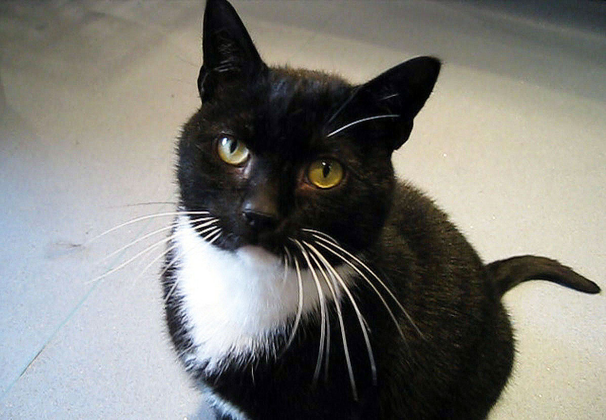 Temporary cat foster care uk