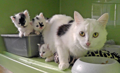 Feral cat that arrived pregnant, giving birth to four kittens