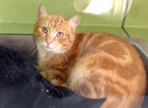 One-year-old feral tom rescued from Hull city centre,