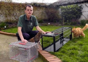 Humane cat trapping equipment used for feral cats and very timid strays
