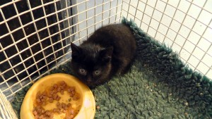 Orphan kittens that need extra care or socialisation benefit from foster care